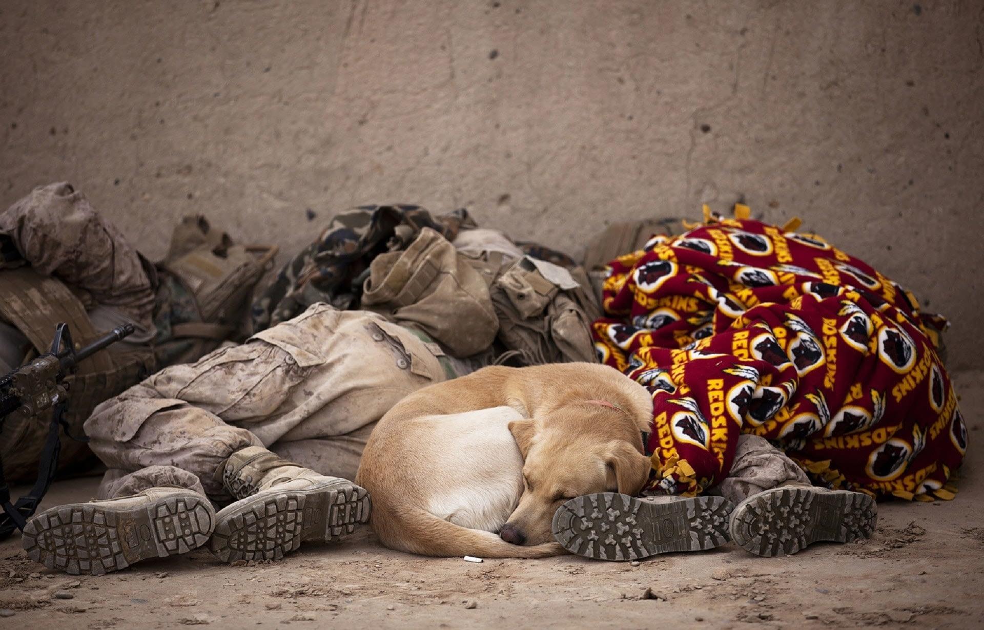 solders sleep with dog
