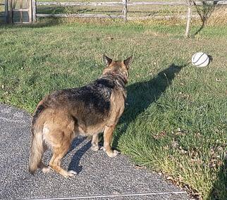 dog-looking-away