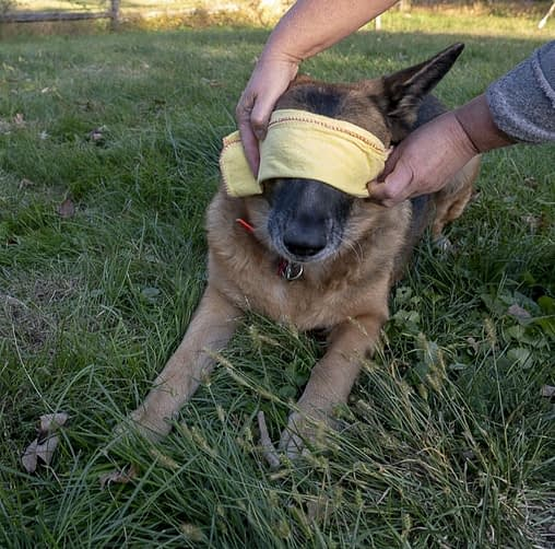 how-to-wash-dog-eyes